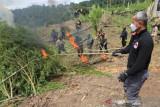 Polri musnahkan 630 ribu batang ganja di Nagan Raya Aceh