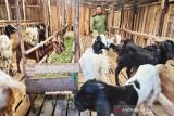 DKPP Palangka Raya bentuk tim pemeriksa kesehatan hewan kurban