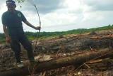 Aktivis lingkungan menilai ekosistem Sungai Bumut di Bartim terganggu
