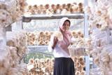 Bangkit dari kesedihan, Rahmawati sukses budidayakan jamur tiram