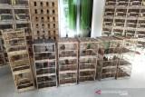 597 burung dilindungi berhasil diselamatkan dari perdagangan ilegal