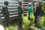 TNI ajarkan kelompok tani di Mimika tanam sayuran secara hidroponik