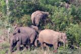 Seorang warga meninggal dunia diinjak gajah liar