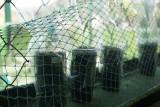 Pekalongan kembangkan bibit tanaman unggul kultur jaringan