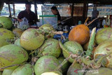 Penjualan Kelapa Muda Melonjak