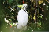 BBKSDA Papua lepas 17 ekor satwa endemik di hutan Timika