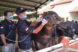 Dinas Pertanian Kudus tingkatkan pemantauan hewan ternak jelang  kurban