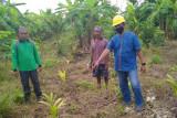 PT SBA Wood Industries bantu petani budidayakan pinang cegah karhutla