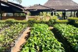 Kabupaten OKU persiapkan kawasan agrowisata di Raksa Jiwa