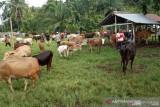 Penjualan hewan kurban meningkat di Pasar Muara Panas Kabupaten Solok