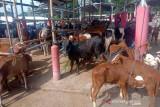 Disnakkan Boyolali tetap periksa hewan kurban
