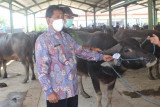 Pemeriksaan hewan kurban gratis di Kudus
