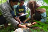Komiu Sulteng sebut kura-kura hutan Sulawesi terancam punah