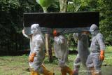 Sejumlah petugas dengan alat pelindung diri lengkap mengangkat peti berisi jenazah pasien COVID-19 yang meninggal dunia menuju ke lokasi pemakaman khusus COVID-19 di Kelurahan Maliaro, Kota Ternate, Provinsi Maluku Utara, Selasa (13/7/2021). Berdasarkan data Satgas COVID-19 Maluku Utara, secara komulatif kasus meninggal dunia akibat COVID-19 di Kota Ternate mencapai 51 orang. (ANTARA FOTO/Harmoko Minggu)