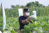 Bupati Kuansing diduga terima suap Rp700 juta dari bos PT AA