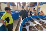 Bupati Pangkep berharap posikandu bantu masyarakat pesisir