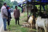 Permintaan hewan kurban menurun di Kota Bandarlampung