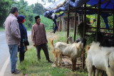 Permintaan hewan kurban di Kota Bandarlampung menurun
