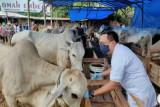 Distanak Bandarlampung belum temukan hewan kurban berpenyakit