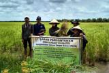 Sumsel optimalisasi lahan tingkatkan  produksi padi