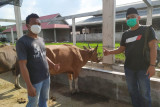 Bupati Kasmarni bantu satu sapi kurban untuk PWI Bengkalis