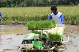 Lampung kembangkan pusat pembenihan padi jaga ketersediaan pangan