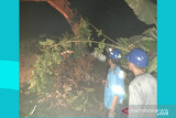 PLN Sulutenggo normalkan kinerja gardu setelah cuaca ekstrem Kotamobagu