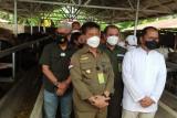 Mentan dan Wali Kota Makassar pantau ketersediaan hewan kurban