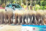 Lidi kelapa sawit tambah penghasilan warga Pasaman Barat saat pandemi