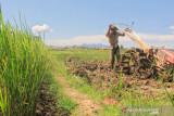 Pemkab Tanah Datar akan sediakan layanan bajak sawah gratis untuk petani