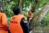 Pria di Murung Raya ini dikira tenggelam setelah melompat dari jembatan