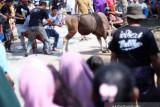 Petugas penyembelihan hewan kurban di Tanjungpinang wajib  jalani tes antigen