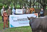 BSI dan Unhas salurkan bantuan sapi kurban untuk dibagikan ke masyarakat