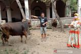 Ketua DPRD NTB sumbang sapi kurban untuk fakir miskin