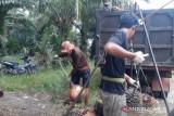 Harga sawit di Bengkulu bertahan Rp2.040/kilogram