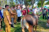 Setahun absen, Pemkot Manado serahkan 42 ekor hewan   kurban