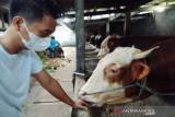 Pedagang hewan kurban di Batang disarankan berdagang secara daring