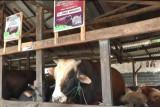Presiden Jokowi beli sapi kurban hasil budidaya warga Palembang