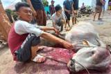 Hewan kurban di Bukittinggi berkurang, tapi tak mengurangi semarak Idul Adha di kota wisata itu