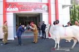 Pemerintah Kabupaten Minahasa serahkan hewan kurban di 34 masjid