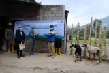 GeoDipa salurkan 49 ekor hewan kurban ke masyarakat