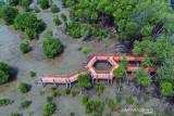 Legislator minta pemkab cari solusi pertahankan ekosistem mangrove di Agam