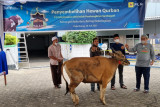 PLN sumbangkan 2.977 hewan kurban