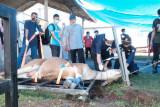 PLN sembelih 57 ekor hewan kurban di wilayah Sulselrabar