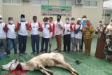 PN Tanjungkarang bagikan daging kurban kepada 400 warga dan dua panti asuhan
