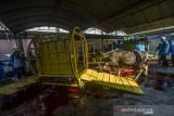 Petugas panitia hewan kurban bersiap memotong sapi di halaman Masjid Al Jihad Banjarmasin, Kalimantan Selatan, Selasa (20/7/2021). Panitia hewan kurban Masjid Al Jihad menyembelih hewan kurban sebanyak 80 ekor sapi menggunakan alat dan membaginya kepada jamaah yang telah berkurban dan selanjutnya mereka yang akan membagi ke masyarakat untuk mengurangi terjadinya kerumunan yang berpotensi meningkatkan jumlah penderita COVID-19. Foto Antaranews Kalsel/Bayu Pratama S.