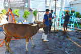 Pegawai Kanwil Kemenkumham Sulsel mengurbankan 10 ekor sapi