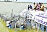 Pemprov Sulsel andalkan Luwu Timur kembangkan budi daya ikan gurami