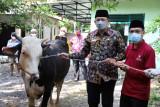 Sleman menggelar Tebar Kurban di masjid yang belum pernah sembelih sapi