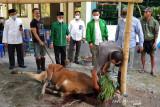 PPP NTB menyalurkan daging kurban untuk warga miskin terdampak PPKM
